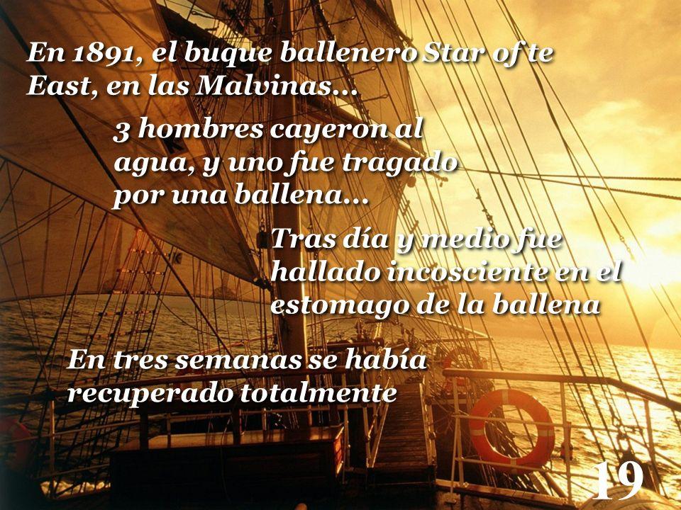 19 En 1891, el buque ballenero Star of te East, en las Malvinas... 3 hombres cayeron al agua, y uno fue tragado por una ballena... Tras día y medio fu