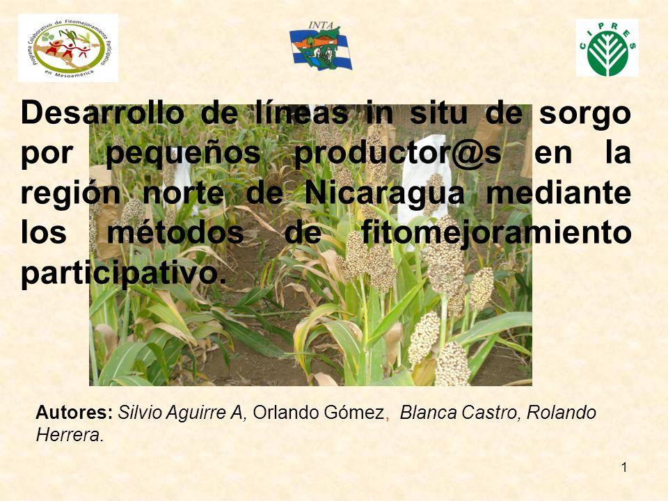1 Desarrollo de líneas in situ de sorgo por pequeños productor@s en la región norte de Nicaragua mediante los métodos de fitomejoramiento participativ