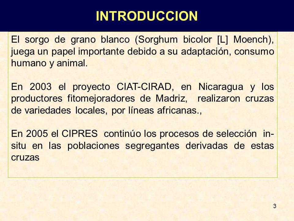 3 El sorgo de grano blanco (Sorghum bicolor [L] Moench), juega un papel importante debido a su adaptación, consumo humano y animal. En 2003 el proyect