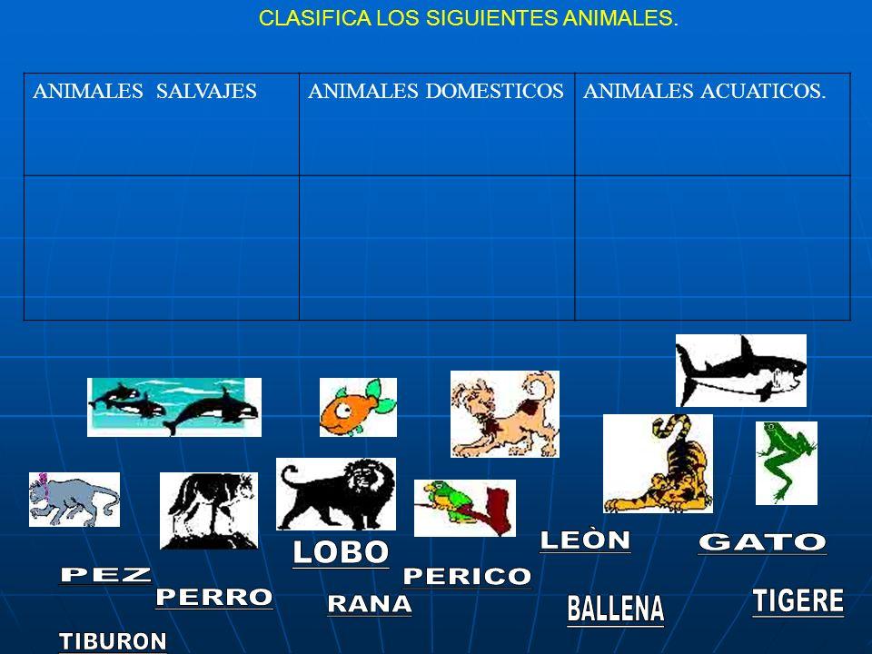 CLASIFICA LOS SIGUIENTES ANIMALES. ANIMALES SALVAJESANIMALES DOMESTICOSANIMALES ACUATICOS.