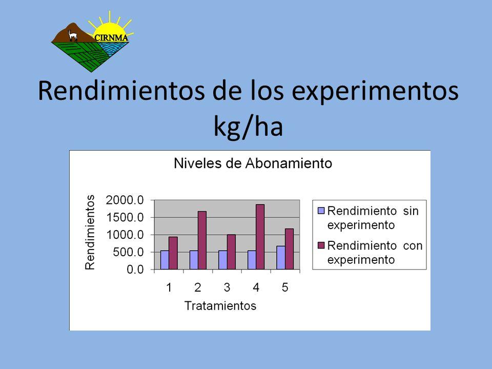 Rendimientos de los experimentos kg/ha
