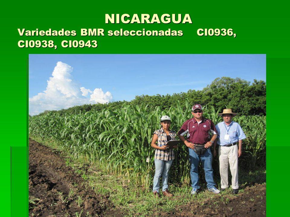 NICARAGUA Variedades BMR seleccionadas CI0936, CI0938, CI0943 NICARAGUA Variedades BMR seleccionadas CI0936, CI0938, CI0943
