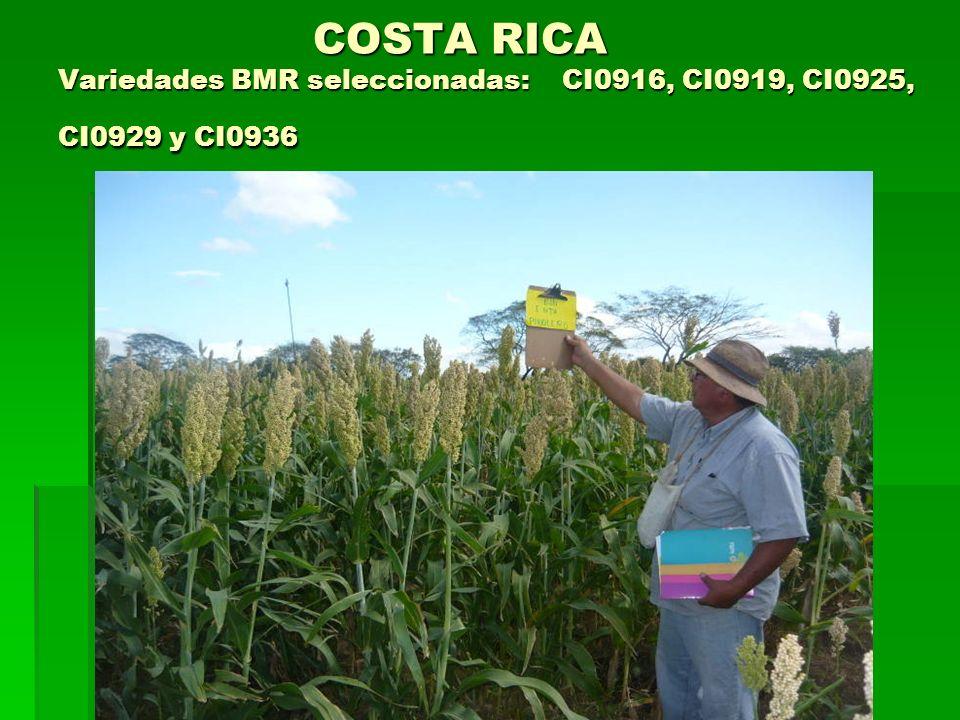 COSTA RICA Variedades BMR seleccionadas: CI0916, CI0919, CI0925, CI0929 y CI0936 COSTA RICA Variedades BMR seleccionadas: CI0916, CI0919, CI0925, CI09