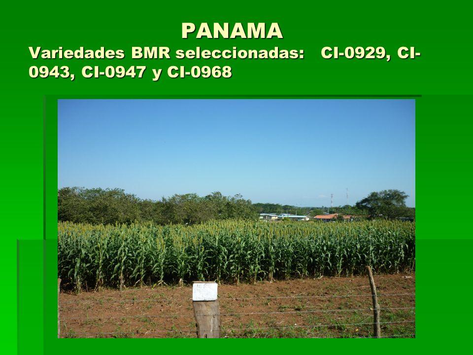 PANAMA Variedades BMR seleccionadas: CI-0929, CI- 0943, CI-0947 y CI-0968 PANAMA Variedades BMR seleccionadas: CI-0929, CI- 0943, CI-0947 y CI-0968