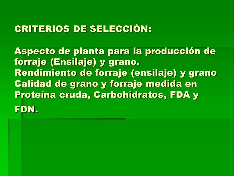 CRITERIOS DE SELECCIÓN: Aspecto de planta para la producción de forraje (Ensilaje) y grano. Rendimiento de forraje (ensilaje) y grano Calidad de grano