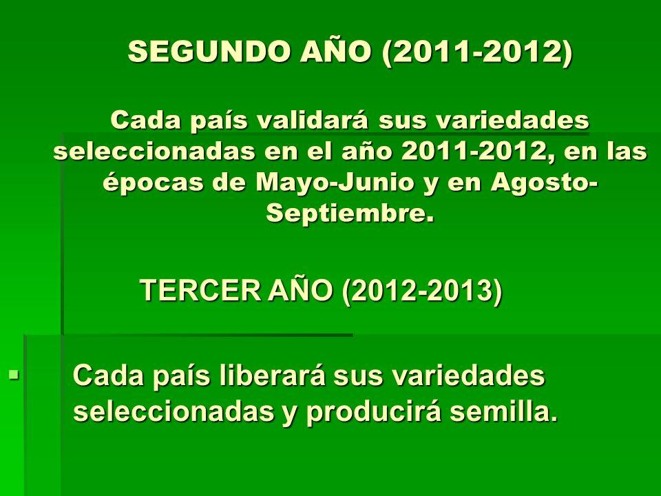SEGUNDO AÑO (2011-2012) Cada país validará sus variedades seleccionadas en el año 2011-2012, en las épocas de Mayo-Junio y en Agosto- Septiembre. TERC