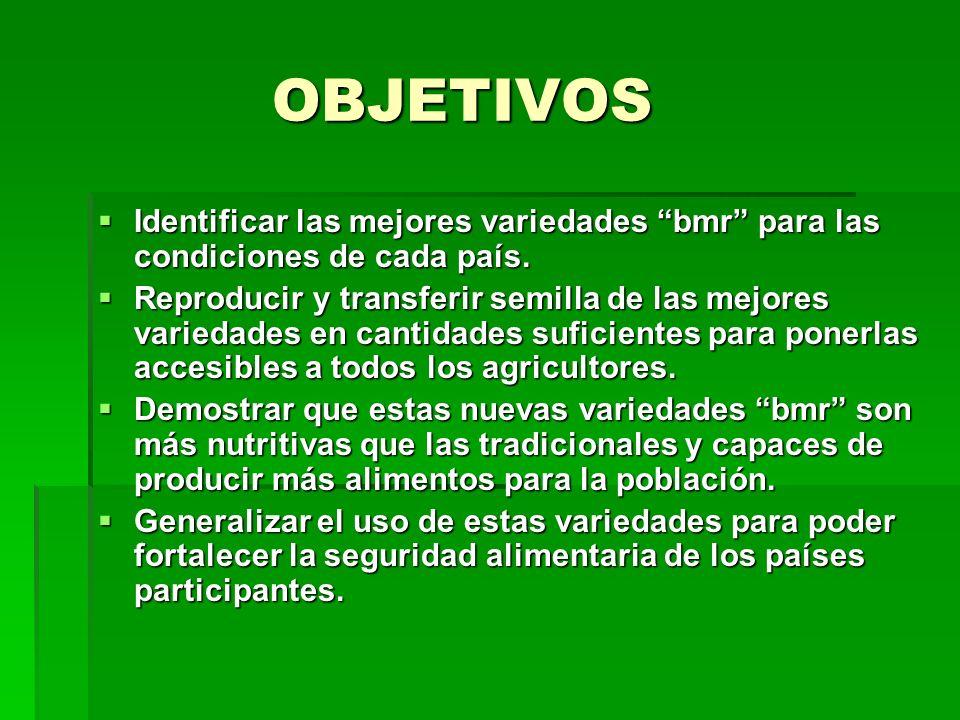 OBJETIVOS OBJETIVOS Identificar las mejores variedades bmr para las condiciones de cada país. Identificar las mejores variedades bmr para las condicio