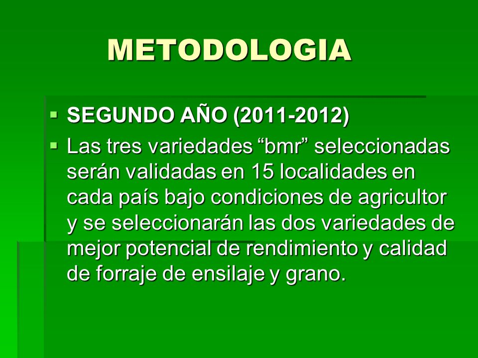 METODOLOGIA METODOLOGIA SEGUNDO AÑO (2011-2012) SEGUNDO AÑO (2011-2012) Las tres variedades bmr seleccionadas serán validadas en 15 localidades en cad