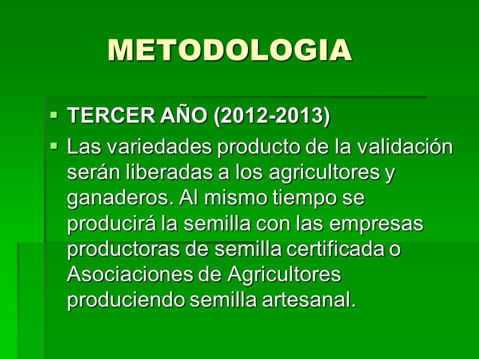 METODOLOGIA METODOLOGIA TERCER AÑO (2012-2013) TERCER AÑO (2012-2013) Las variedades producto de la validación serán liberadas a los agricultores y ga