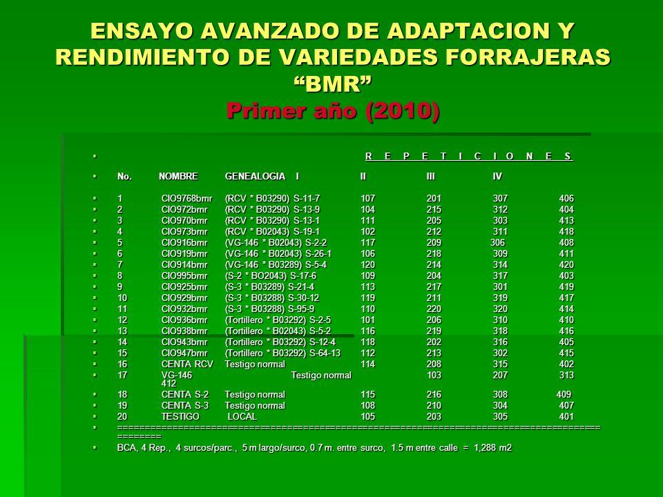 ENSAYO AVANZADO DE ADAPTACION Y RENDIMIENTO DE VARIEDADES FORRAJERAS BMR Primer año (2010) R E P E T I C I O N E S R E P E T I C I O N E S No.NOMBREGE