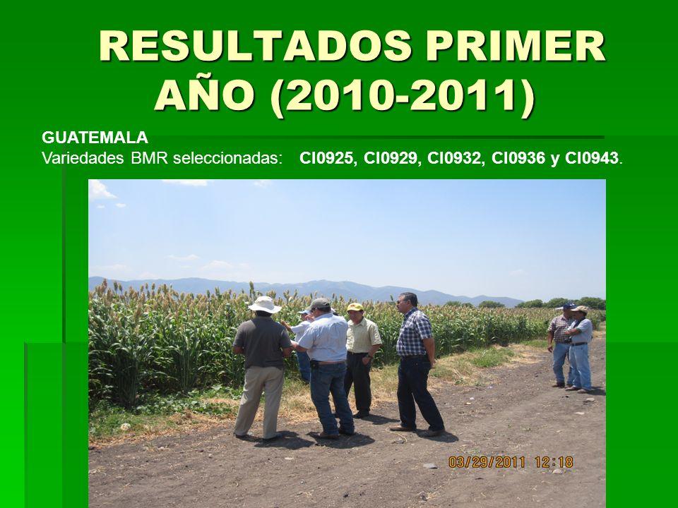 RESULTADOS PRIMER AÑO (2010-2011) RESULTADOS PRIMER AÑO (2010-2011) GUATEMALA Variedades BMR seleccionadas: CI0925, CI0929, CI0932, CI0936 y CI0943.