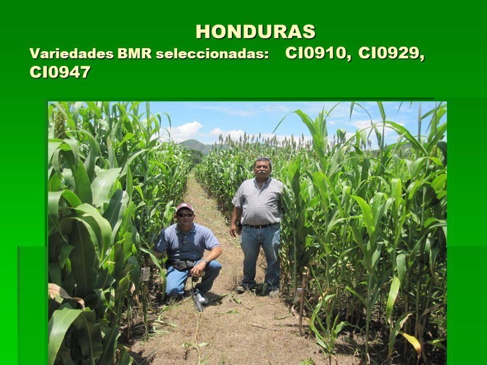HONDURAS Variedades BMR seleccionadas: CI0910, CI0929, CI0947 HONDURAS Variedades BMR seleccionadas: CI0910, CI0929, CI0947