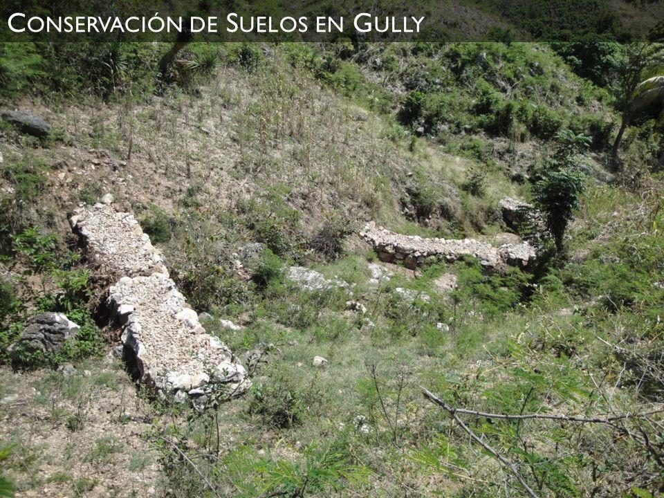 C ONSERVACIÓN DE S UELOS EN G ULLY