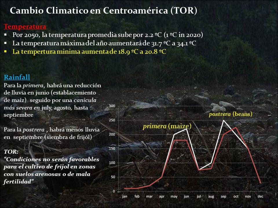 . Cambio Climatico en Centroamérica (TOR) Rainfall Para la primera, habrá una reducción de lluvia en junio (establacemiento de maíz) seguido por una c