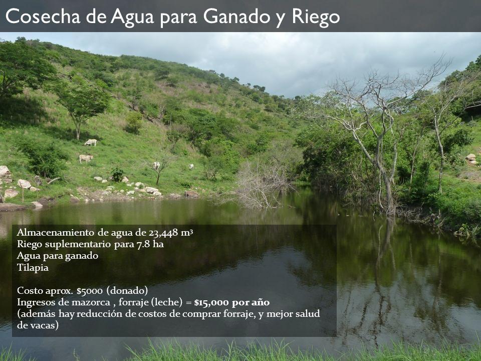 Cosecha de Agua para Ganado y Riego Almacenamiento de agua de 23,448 m 3 Riego suplementario para 7.8 ha Agua para ganado Tilapia Costo aprox. $5000 (
