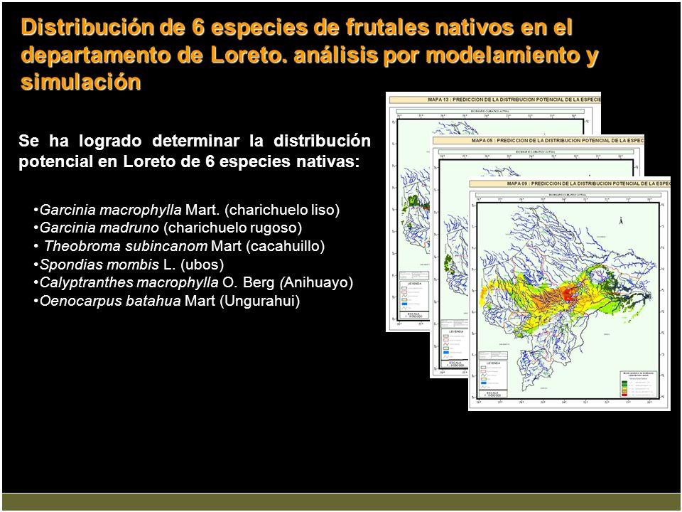Se ha logrado determinar la distribución potencial en Loreto de 6 especies nativas: Distribución de 6 especies de frutales nativos en el departamento