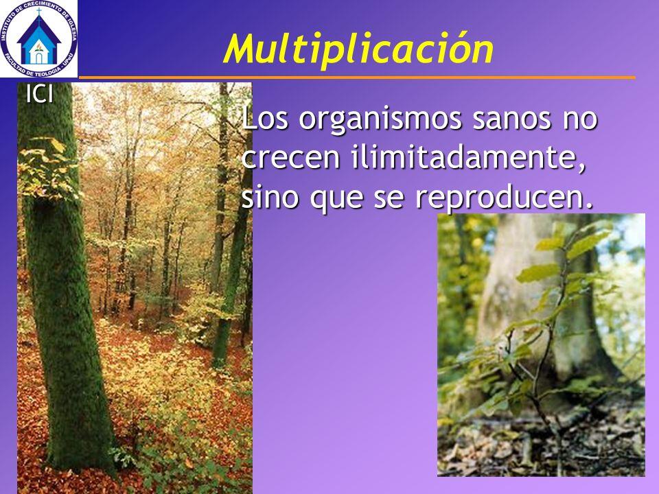 Multiplicación Los organismos sanos no crecen ilimitadamente, sino que se reproducen. ICI