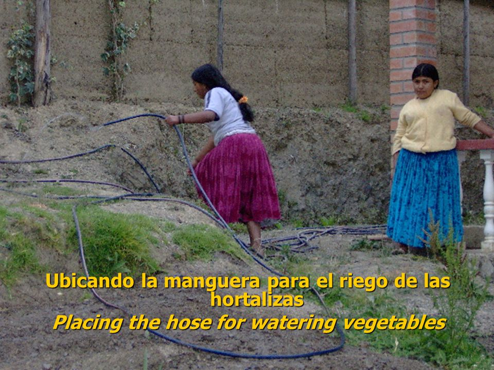 Ubicando la manguera para el riego de las hortalizas Placing the hose for watering vegetables