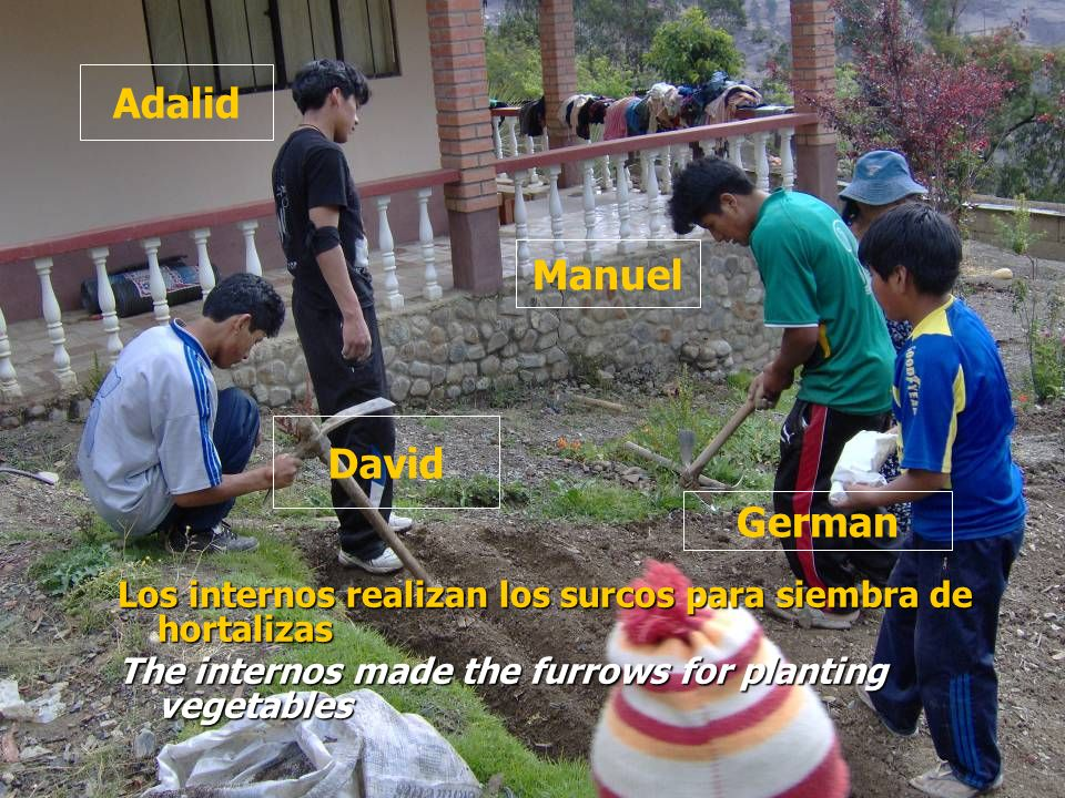 Los internos realizan los surcos para siembra de hortalizas The internos made the furrows for planting vegetables Adalid David Manuel German