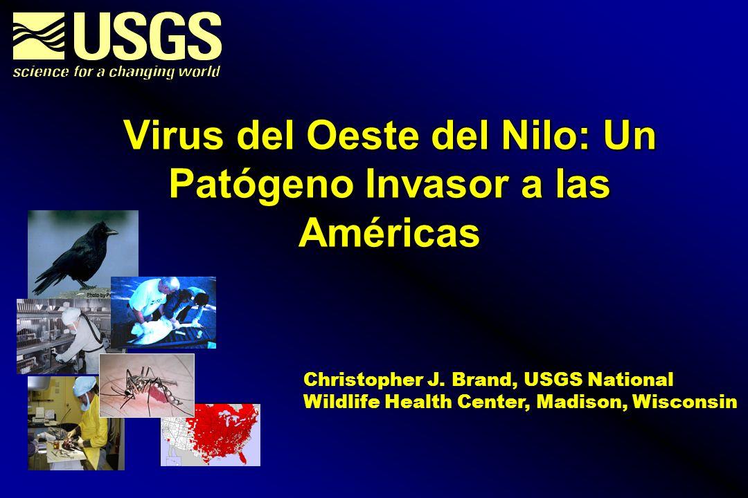 2001 2002 2003 ? Difusión potencial del Virus del Oestre del Nilo por Aves Migratorias