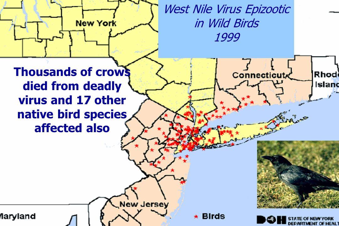 Fuentes del Virus del Oeste del Nilo en Norteamérica ¿Mosquitos infectados?¿Mosquitos infectados.