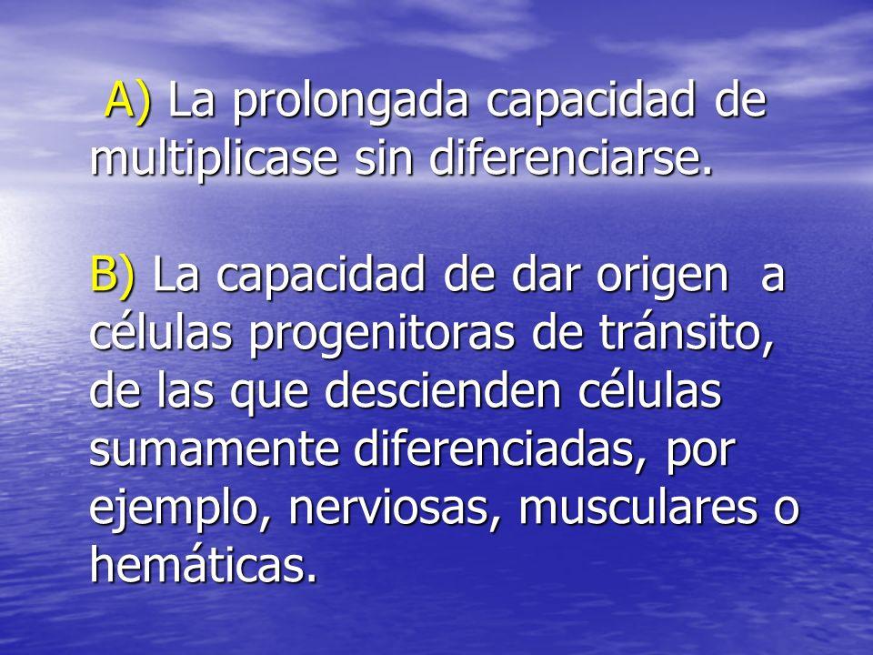 A) La prolongada capacidad de multiplicase sin diferenciarse. B) La capacidad de dar origen a células progenitoras de tránsito, de las que descienden