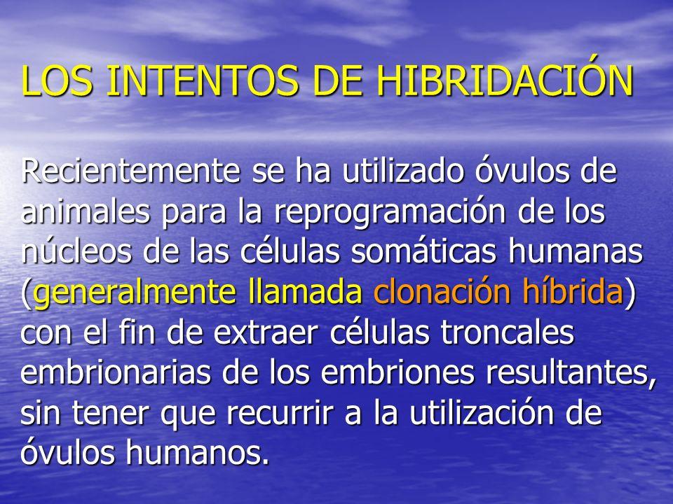 LOS INTENTOS DE HIBRIDACIÓN Recientemente se ha utilizado óvulos de animales para la reprogramación de los núcleos de las células somáticas humanas (g