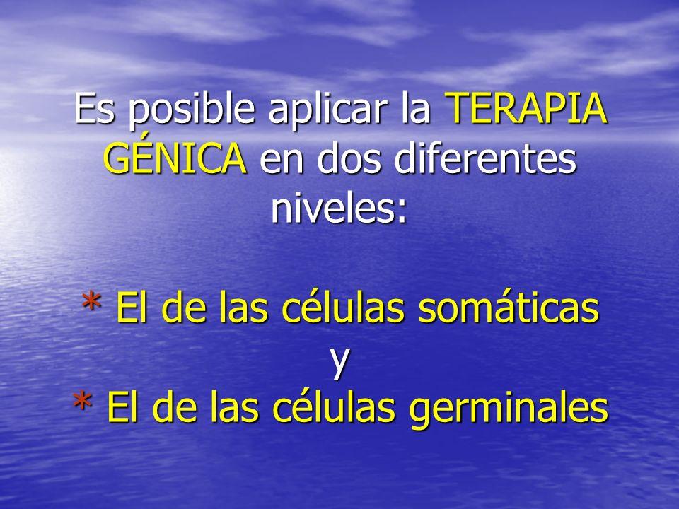 Es posible aplicar la TERAPIA GÉNICA en dos diferentes niveles: * El de las células somáticas y * El de las células germinales