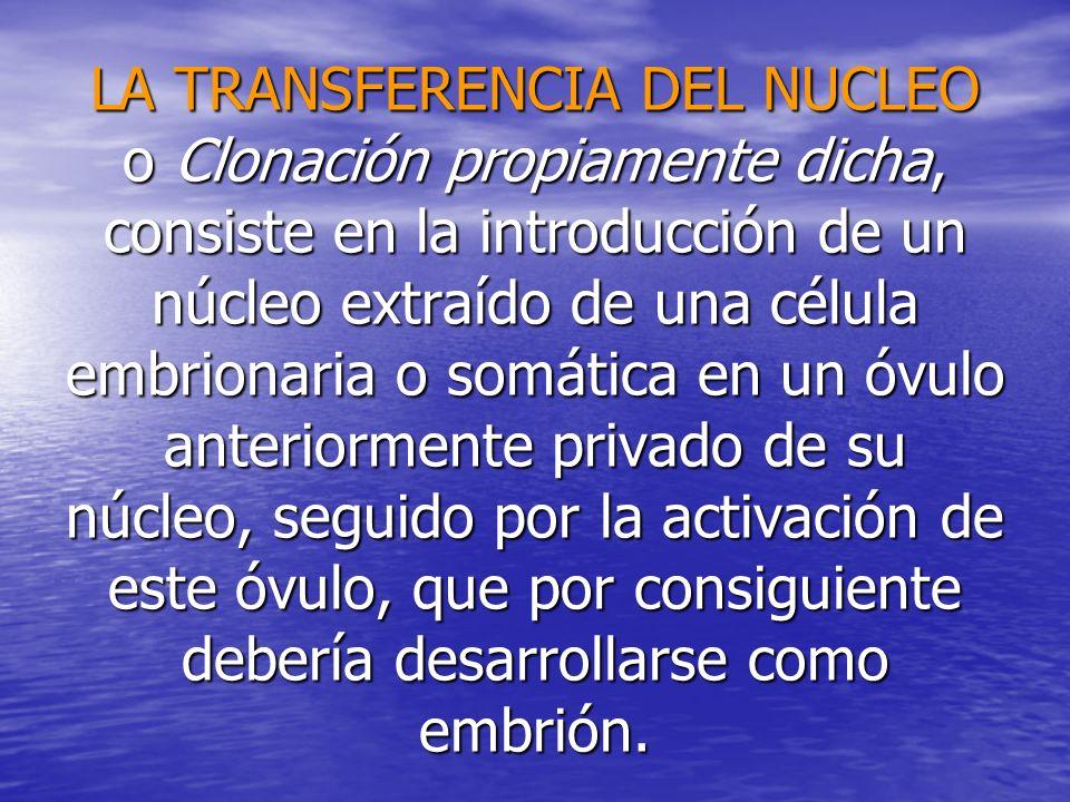 LA TRANSFERENCIA DEL NUCLEO o Clonación propiamente dicha, consiste en la introducción de un núcleo extraído de una célula embrionaria o somática en u