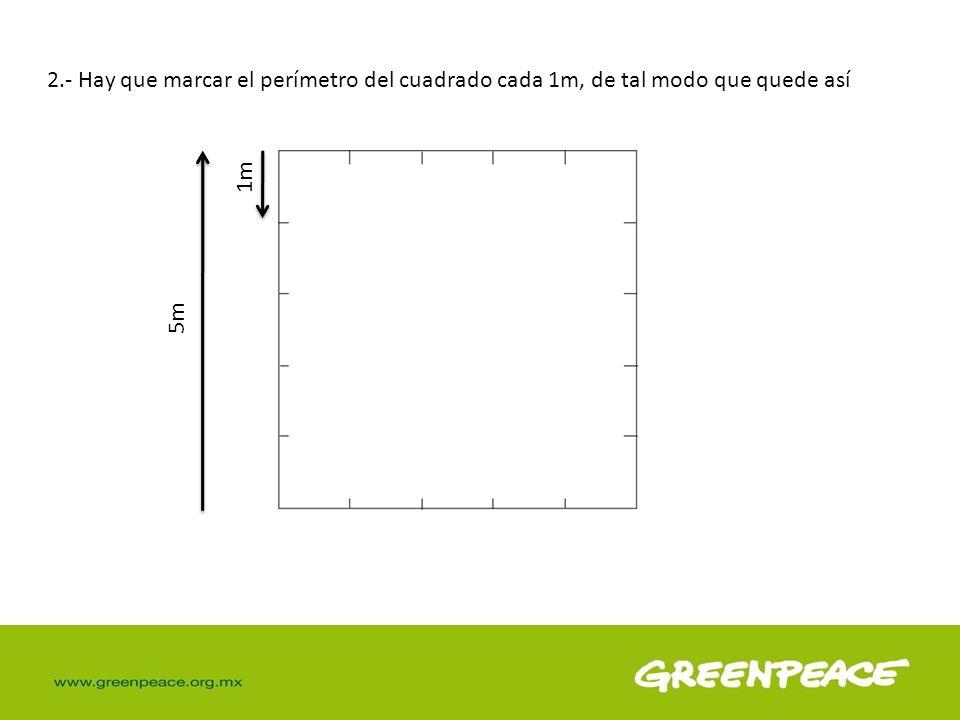 2.- Hay que marcar el perímetro del cuadrado cada 1m, de tal modo que quede así 1m 5m