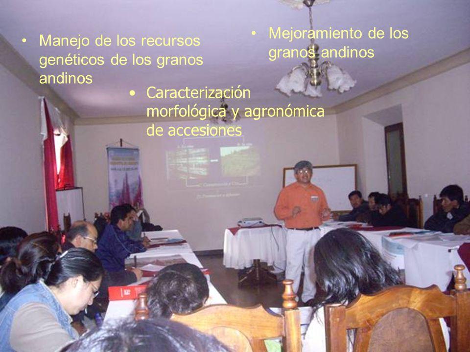Manejo de los recursos genéticos de los granos andinos Mejoramiento de los granos andinos Caracterización morfológica y agronómica de accesiones