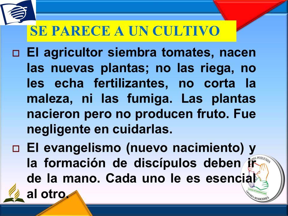 SE PARECE A UN CULTIVO El agricultor siembra tomates, nacen las nuevas plantas; no las riega, no les echa fertilizantes, no corta la maleza, ni las fu