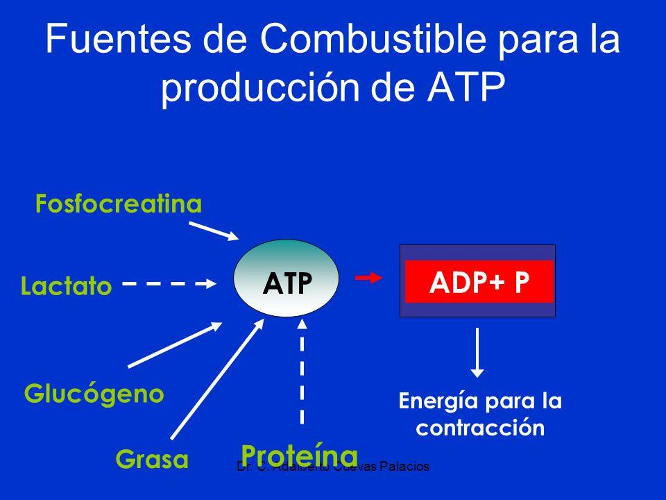 Dr. C. Adalberto Cuevas Palacios Fuentes de Combustible para la producción de ATP Fosfocreatina Lactato Glucógeno Grasa Energía para la contracción AT