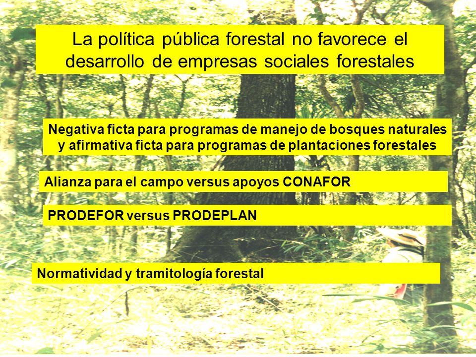 La política pública forestal no favorece el desarrollo de empresas sociales forestales Negativa ficta para programas de manejo de bosques naturales y