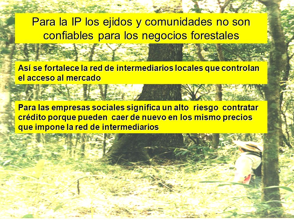 Para la IP los ejidos y comunidades no son confiables para los negocios forestales Así se fortalece la red de intermediarios locales que controlan el