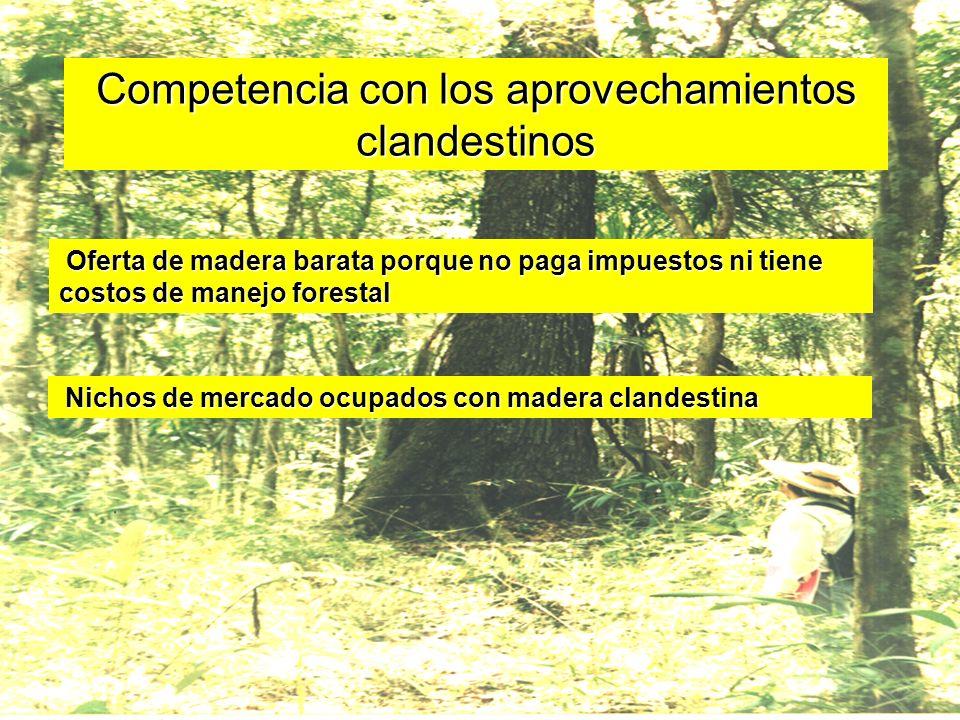 Competencia con los aprovechamientos clandestinos Oferta de madera barata porque no paga impuestos ni tiene costos de manejo forestal Nichos de mercad