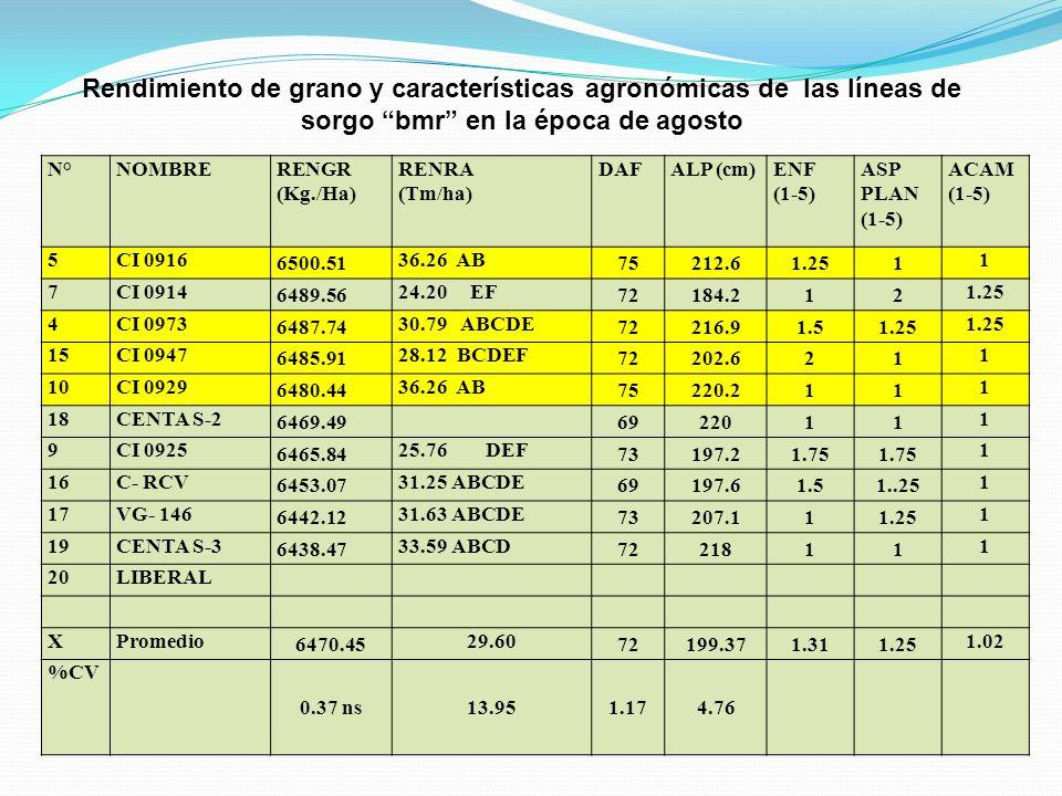 Rendimiento de grano y características agronómicas de las líneas de sorgo bmr en la época de agosto N°NOMBRERENGR (Kg./Ha) RENRA (Tm/ha) DAFALP (cm)EN