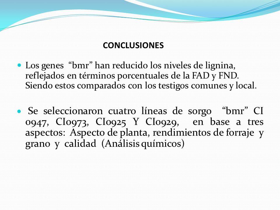 CONCLUSIONES Los genes bmr han reducido los niveles de lignina, reflejados en términos porcentuales de la FAD y FND. Siendo estos comparados con los t