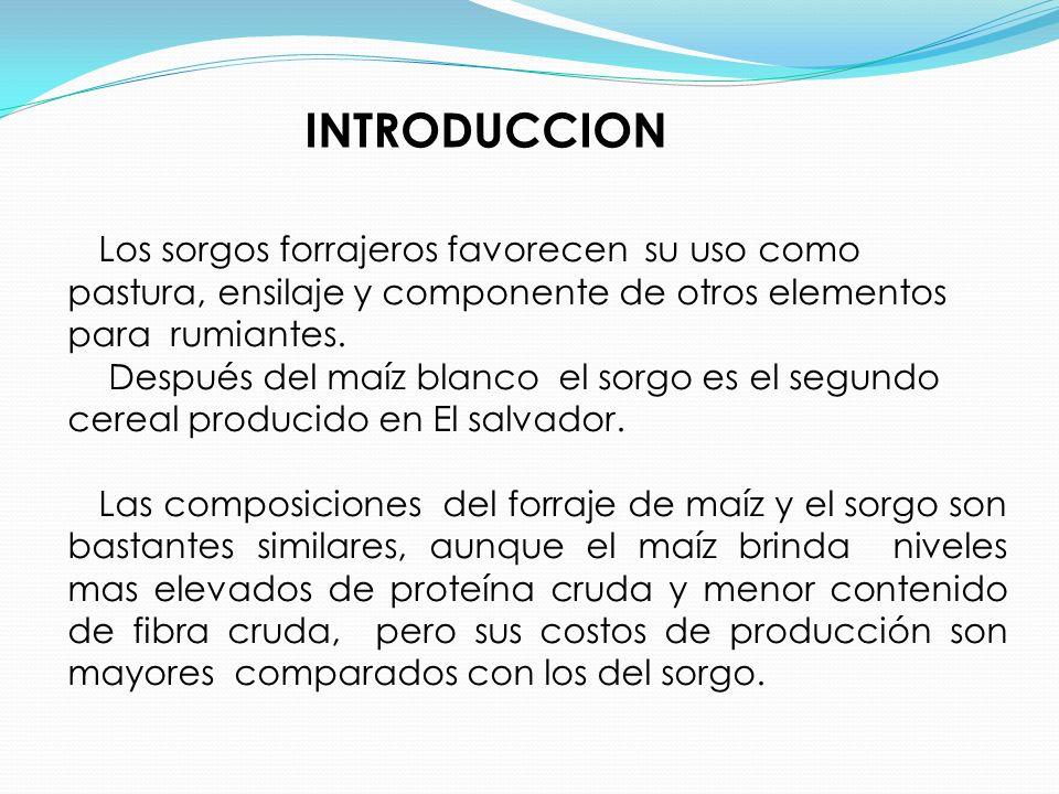 INTRODUCCION Los sorgos forrajeros favorecen su uso como pastura, ensilaje y componente de otros elementos para rumiantes. Después del maíz blanco el