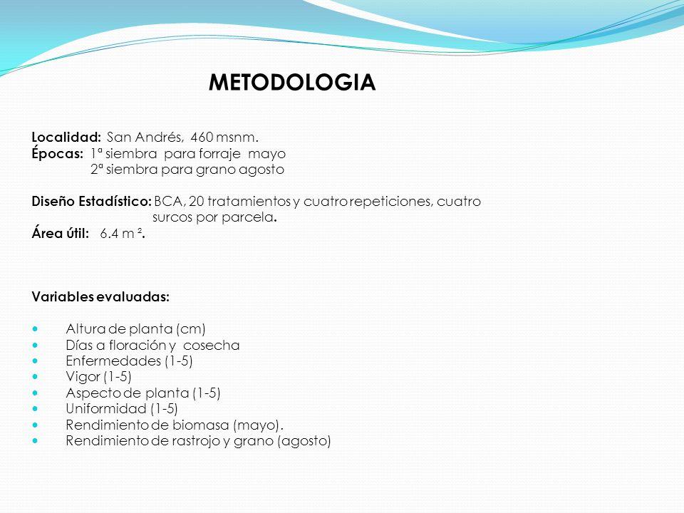MUESTREO: PESO DE BIOMASA DEL AREA UTIL (mazoso-lechoso) PREPARACION DE MUESTRAS PARA ANALISIS Envío de muestra al laboratorio ANALISIS QUIMICO Análisis bromatológico (GRANO Y FORRAJE) Fibra neutro detergente (FORRAJE) Fibra acido detergente (FORRAJE)