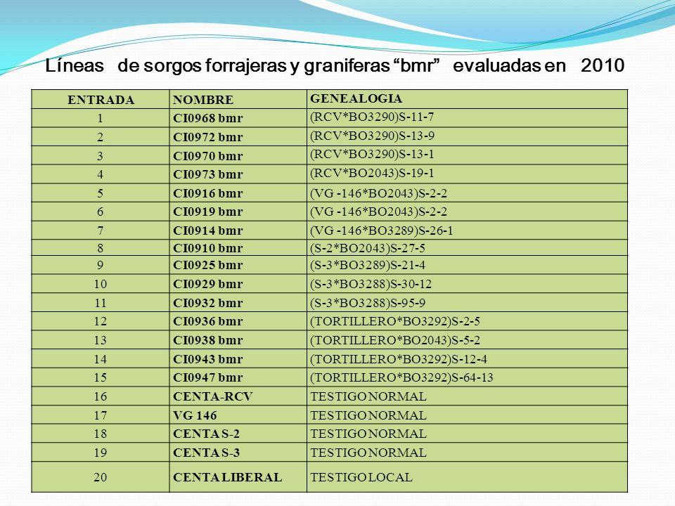 Líneas de sorgos forrajeras y graniferas bmr evaluadas en 2010 ENTRADANOMBRE GENEALOGIA 1CI0968 bmr (RCV*BO3290)S-11-7 2CI0972 bmr (RCV*BO3290)S-13-9
