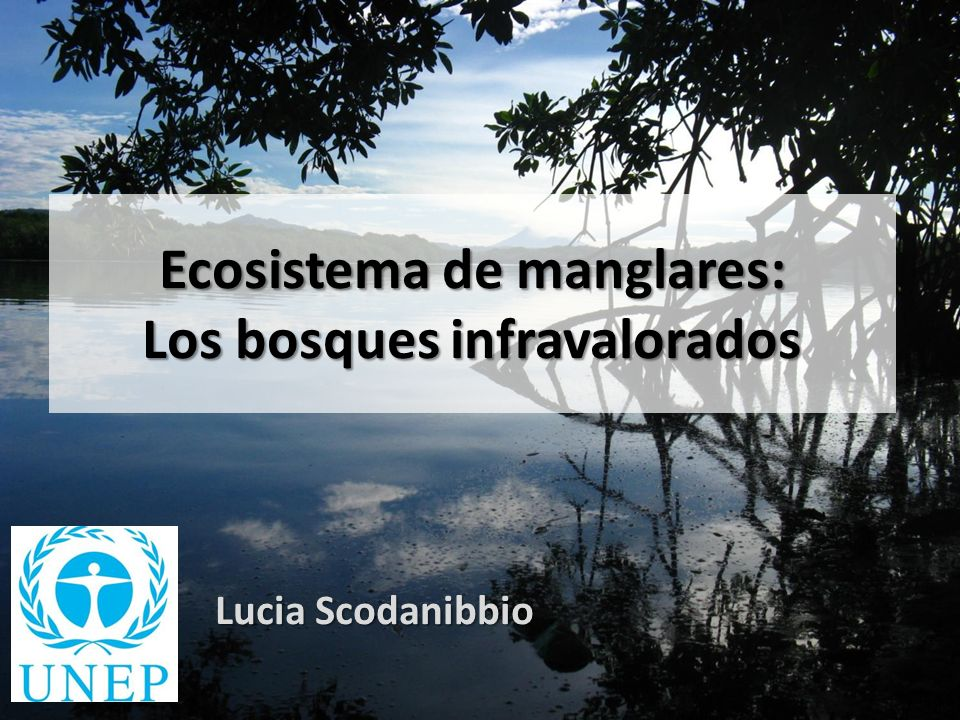 Ecosistema de manglares: Los bosques infravalorados Lucia Scodanibbio
