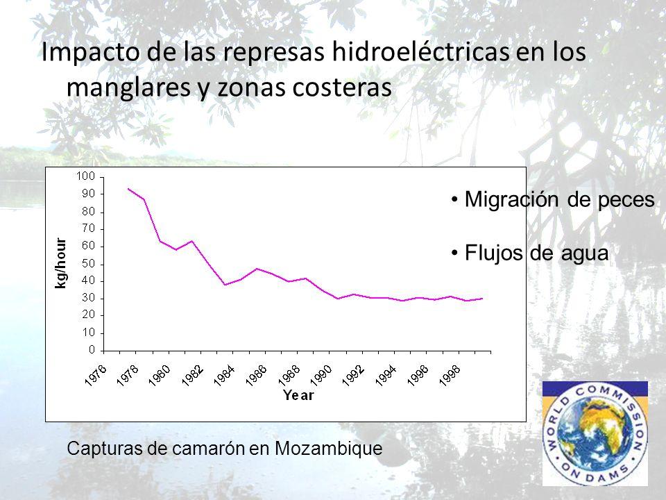 Impacto de las represas hidroeléctricas en los manglares y zonas costeras Capturas de camarón en Mozambique Migración de peces Flujos de agua