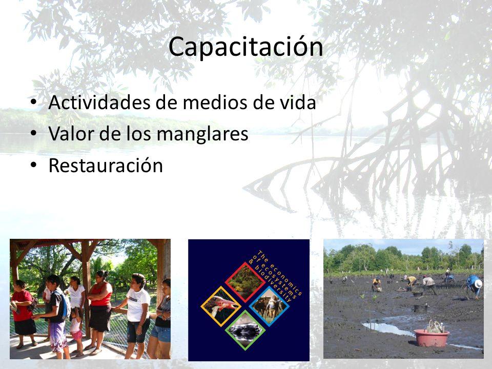 Capacitación Actividades de medios de vida Valor de los manglares Restauración