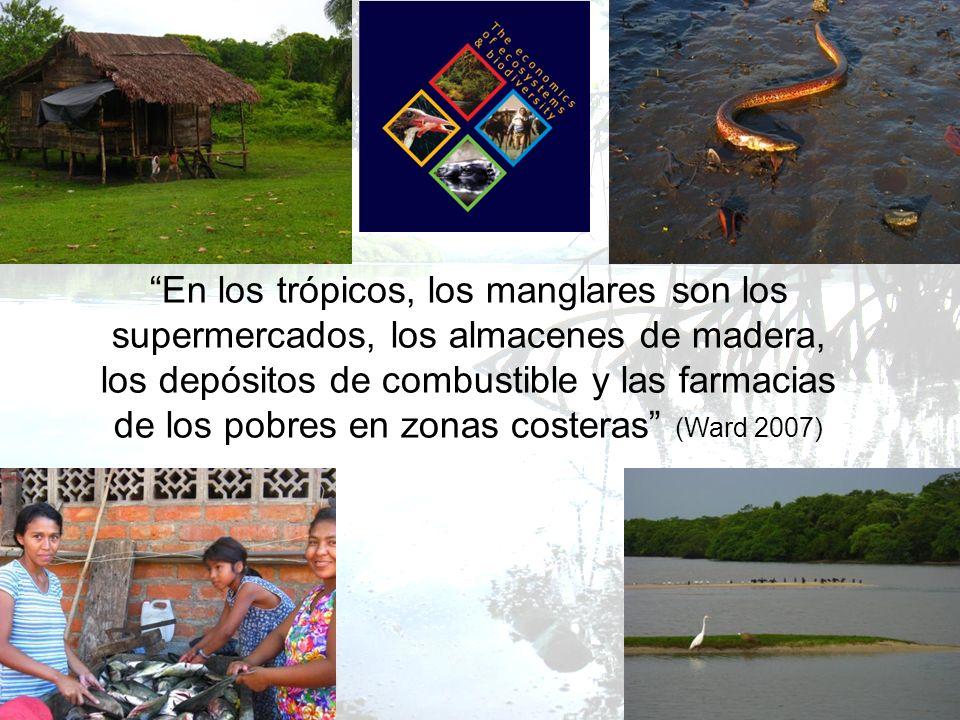 En los trópicos, los manglares son los supermercados, los almacenes de madera, los depósitos de combustible y las farmacias de los pobres en zonas cos