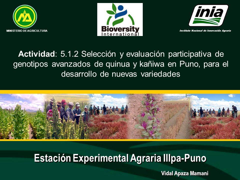 Estación Experimental Agraria Illpa-Puno MINISTERIO DE AGRICULTURA Instituto Nacional de Innovación Agraria Vidal Apaza Mamani Actividad: 5.1.2 Selecc