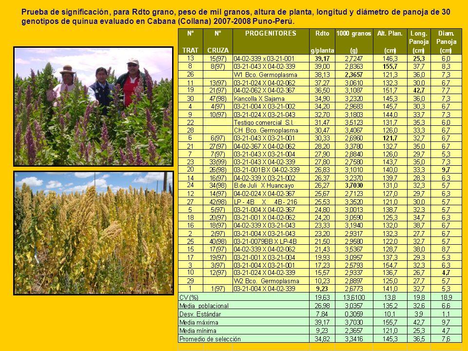 Prueba de significación, para Rdto grano, peso de mil granos, altura de planta, longitud y diámetro de panoja de 30 genotipos de quinua evaluado en Ca