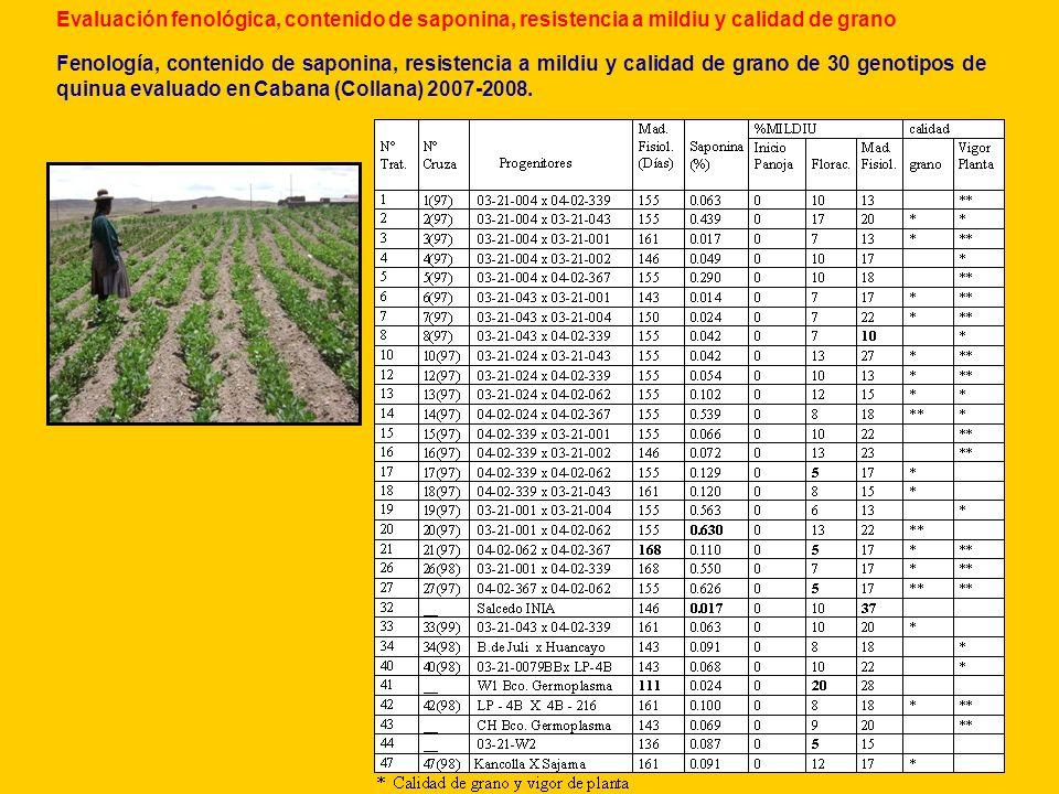 Evaluación fenológica, contenido de saponina, resistencia a mildiu y calidad de grano Fenología, contenido de saponina, resistencia a mildiu y calidad