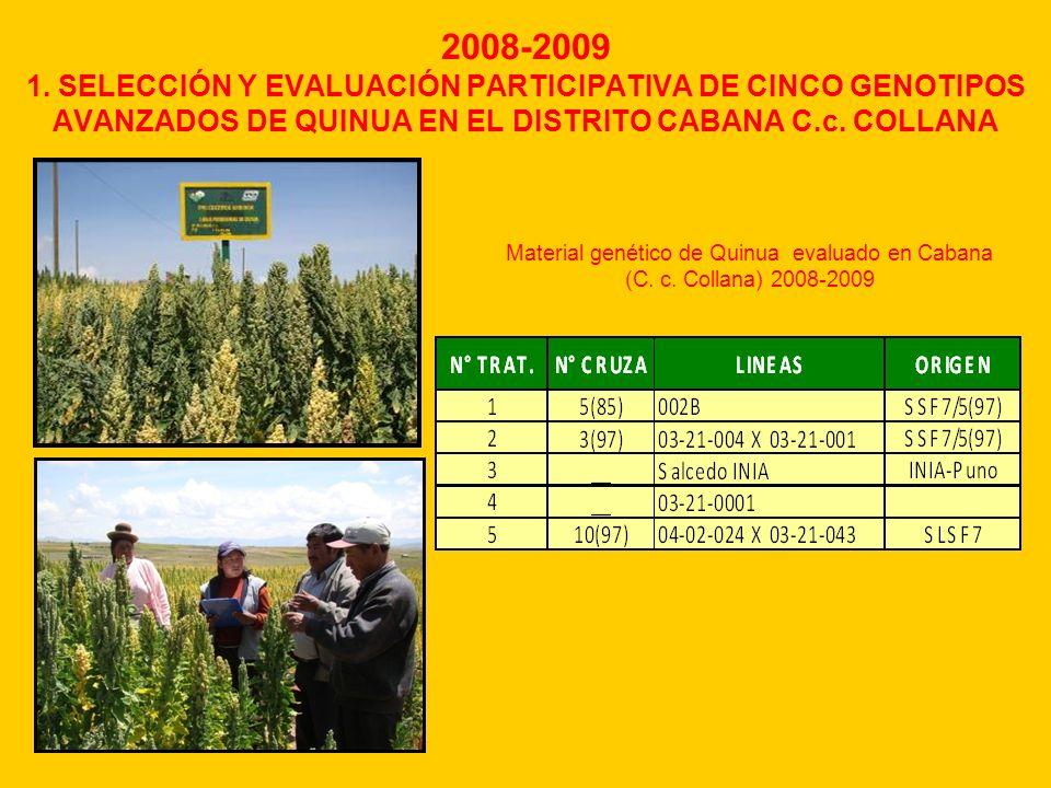 2008-2009 1. SELECCIÓN Y EVALUACIÓN PARTICIPATIVA DE CINCO GENOTIPOS AVANZADOS DE QUINUA EN EL DISTRITO CABANA C.c. COLLANA Material genético de Quinu