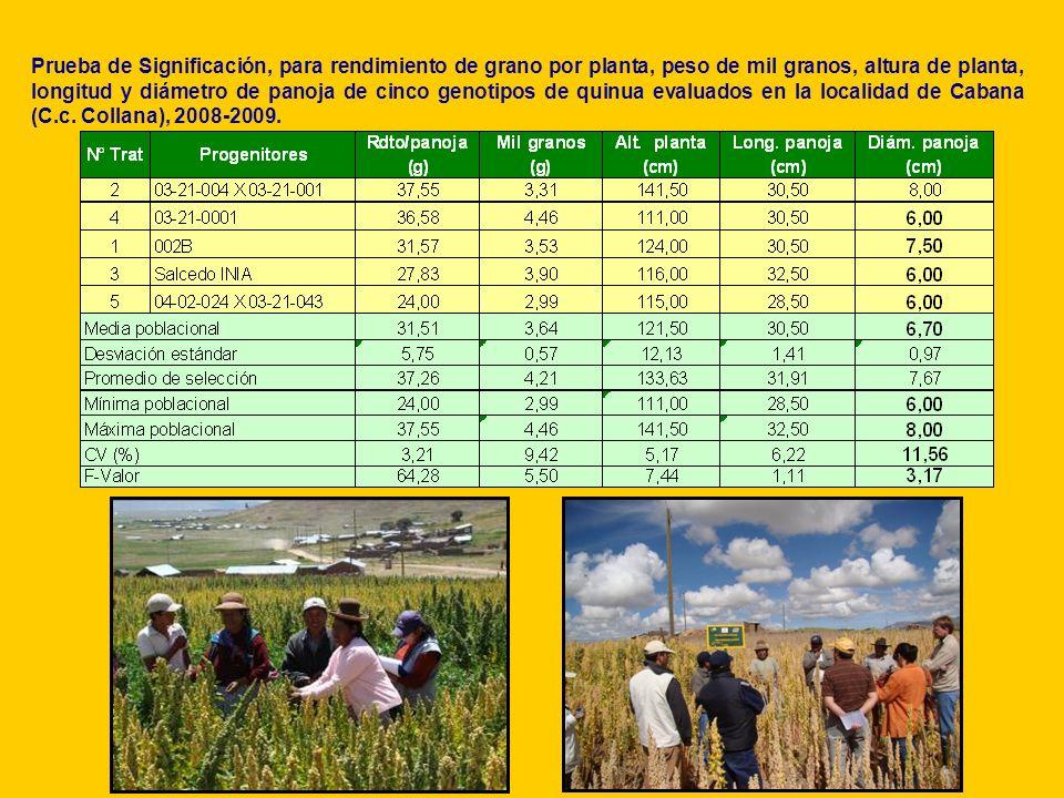 Prueba de Significación, para rendimiento de grano por planta, peso de mil granos, altura de planta, longitud y diámetro de panoja de cinco genotipos